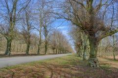 Het Park van Clumber van de lindeboomweg Stock Fotografie