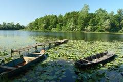 Het park van de aard Lonjsko Polje - Kroatië Royalty-vrije Stock Foto's