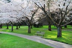 Het park van de Bloesem van de kers Royalty-vrije Stock Foto's