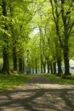 Het park van de boomsteeg in Bristol Stock Foto's