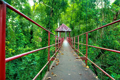Het park van de brug bosaard groen in het dier van Thailand in openlucht Royalty-vrije Stock Afbeelding