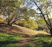 Het Park van de Canion van Elyria Stock Afbeelding
