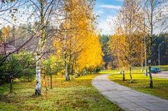 Het park van de dalingsberk royalty-vrije stock fotografie