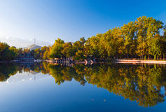 Het park van de de herfstochtend Stock Afbeeldingen