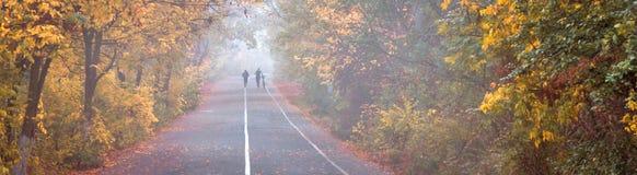 Het park van de de herfststad, jogging en fietsweg Royalty-vrije Stock Afbeeldingen