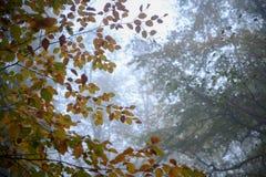 Het park van de de herfststilte met mist Stock Afbeelding