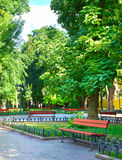Het park van de de zomerstad bij middag, heldere zonnige dag, bomen met schaduwen en groen gras Royalty-vrije Stock Foto's
