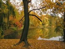 Het park van de herfst Stock Afbeelding