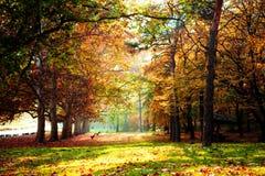 Het park van de herfst stock foto's