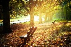 Het park van de herfst royalty-vrije stock foto's