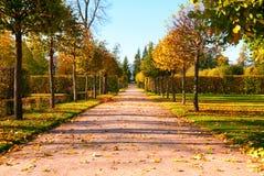 Het park van de herfst Stock Foto