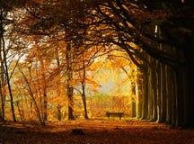 Het park van de herfst Royalty-vrije Stock Afbeeldingen
