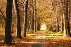 Het park van de herfst. Stock Afbeeldingen