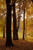 Het park van de herfst in de ochtend Royalty-vrije Stock Foto's