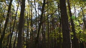 Het park van de de herfststad bij zonsondergang van de dag De zon glanst door de bomen stock videobeelden