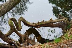 Het park van de Hillsboroughrivier Stock Foto's