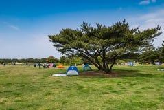 Het Park van de Hitachikust Royalty-vrije Stock Afbeeldingen