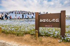 Het Park van de Hitachikust Royalty-vrije Stock Afbeelding