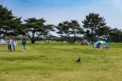 Het Park van de Hitachikust Royalty-vrije Stock Fotografie