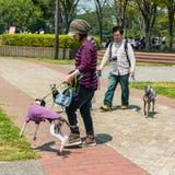 Het Park van de Hitachikust Stock Fotografie