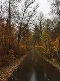 Het park van de Itascastaat Stock Foto