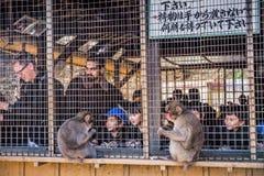 Het Park van de Iwatayamaaap stock afbeeldingen
