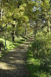 Het park van de Kitinoboerenkool Stock Foto's