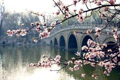 Het park van de lente royalty-vrije stock afbeelding