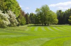 Het park van de lente stock fotografie