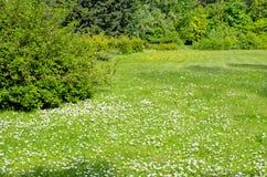 Het park van de lente Royalty-vrije Stock Foto's