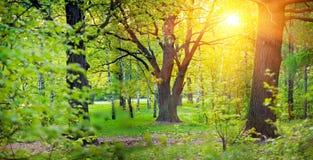 Het park van de lente met eik stock foto