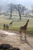 Het Park van de safari stock afbeelding