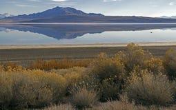 Het Park van de Staat van het antilopeeiland in de Winter stock fotografie