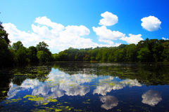 Het Park van de Staat van Caleb Stock Foto