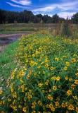 Het Park van de Staat van de Besnoeiing van de rots - Illinois Stock Fotografie
