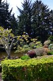 Het Park van de Staat van kustacres, Charleston Oregon Stock Fotografie