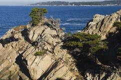 Het Park van de Staat van Lobos van het punt, Monterey, Californië stock foto