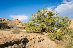 Het Park van de Staat van Vasquezrotsen Californië Stock Afbeeldingen