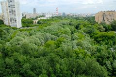 Het Park van de stad. Stock Foto