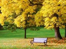 Het park van de stad in de herfst Royalty-vrije Stock Fotografie
