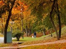 Het park van de stadsherfst, gang met een hond, natuurlijk licht Stock Foto
