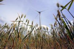 Het park van de windturbine Stock Fotografie