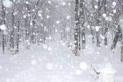 Het park van de winter Royalty-vrije Stock Fotografie