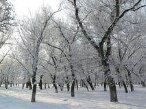 Het park van de winter Stock Foto's