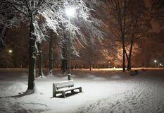 Het park van de winter bij nacht Stock Afbeeldingen