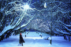 Het park van de winter bij nacht Stock Foto's