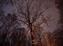 Het park van de winter bij nacht Royalty-vrije Stock Foto's