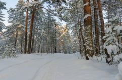 Het park van de winter dat met sneeuw wordt behandeld Stock Foto's