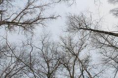 Het park van de winter Kronen van bomen avond schemer koud royalty-vrije stock foto's
