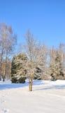Het park van de winter in sneeuw Royalty-vrije Stock Foto's